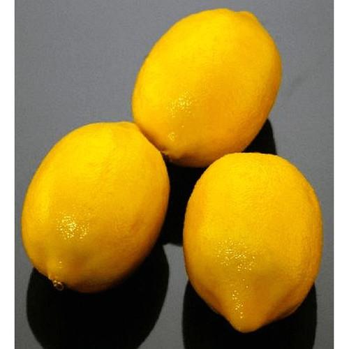 Lemon Replica Small