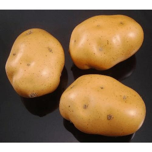 Potato Replica Smalll