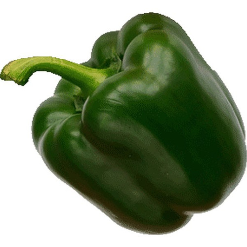 Green Bell Pepper Replica Small