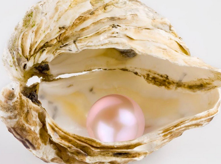 Pink in pearl in oyster
