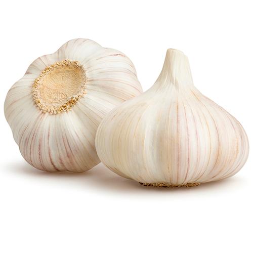 Garlic ORG