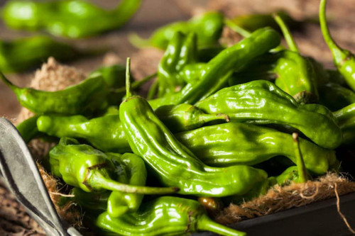 Chile Pepper Shishito (LB)