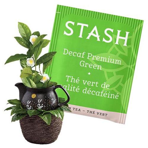 Stash Decaf Premium Green Tea Bags
