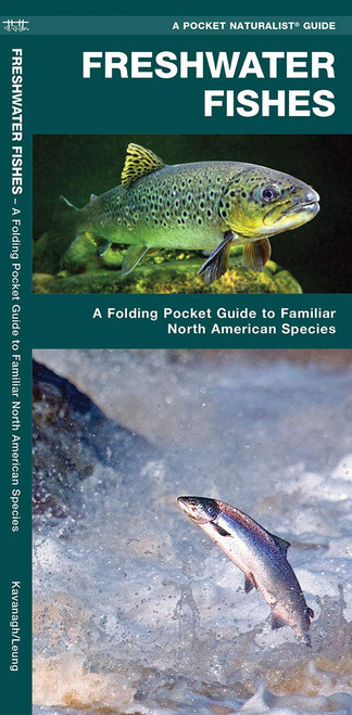 Freshwater Fishes: A Folding Pocket Guide to Familiar North American Species