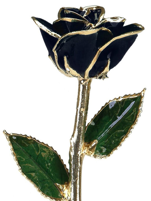 """Midnight Magic"" Black Rose Trimmed in 24kt Gold"