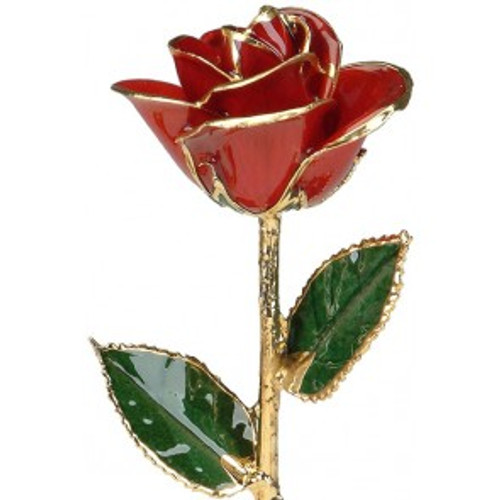 """Cherry Jubilee"" Red Rose Trimmed in 24kt Gold"