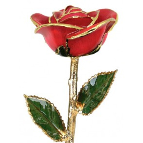 """Color Me Happy"" Coral Red Rose Trimmed in 24kt Gold"