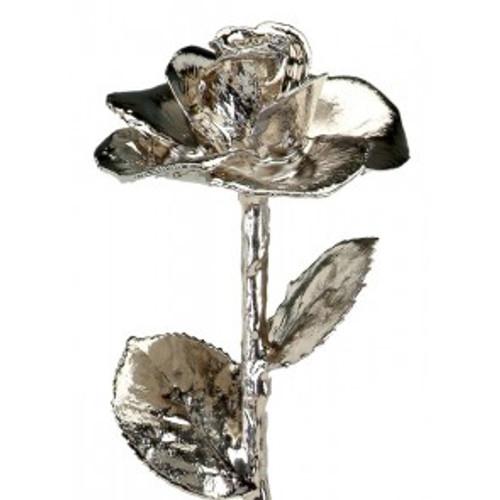 Platinum (Diana) Rose