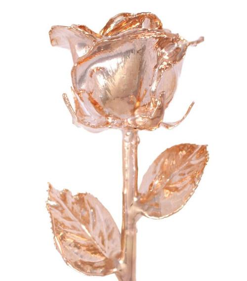 Rose Gold (Venus) Rose Trimmed in 24kt Gold