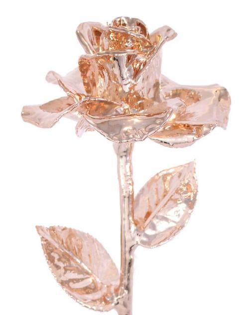 Rose Gold (Diana) Rose Trimmed in 24kt Gold