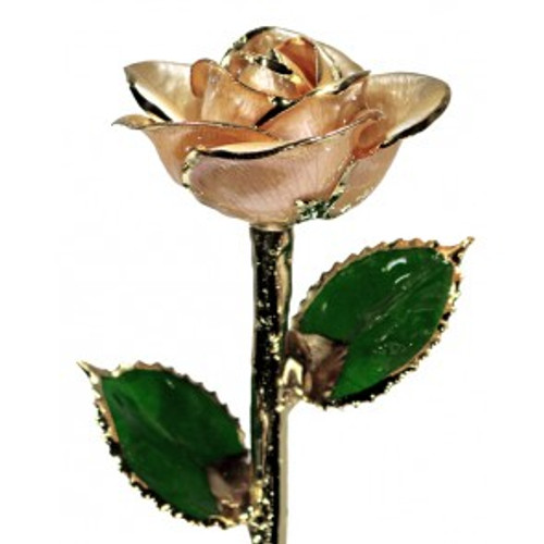 """Champagne Bubbles"" Champagne Rose Trimmed in 24kt Gold"