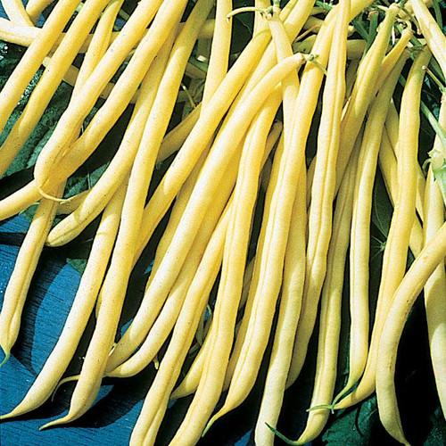 Yellow_Beans