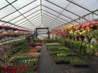 greenhouse-growing.jpeg