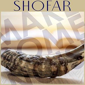 Yemenite Shofars Rams Horn