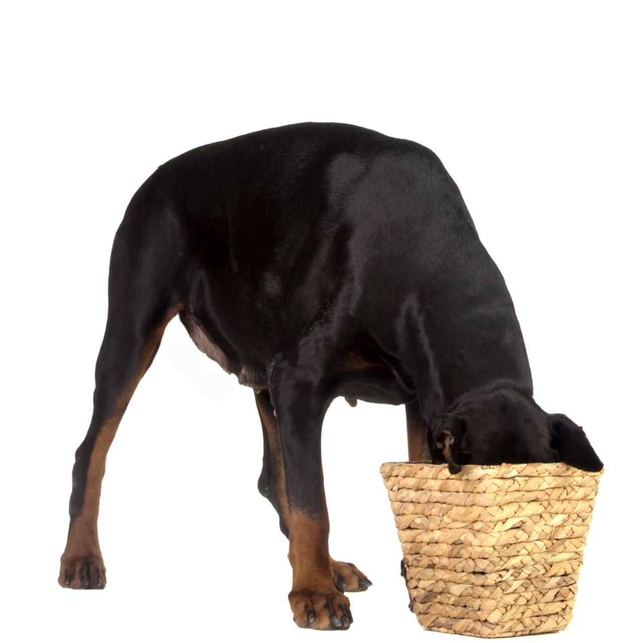 All Dog Treats