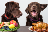 Are you feeding your dog the right diet?