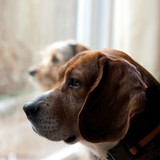 How to Help Your Dog Deal with Separation Anxiety