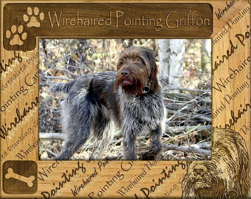 Frame - Wirehaired Pointing Griffon