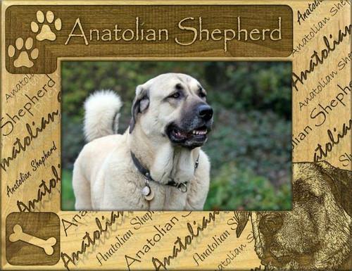 Frame - Anatolian Shepherd