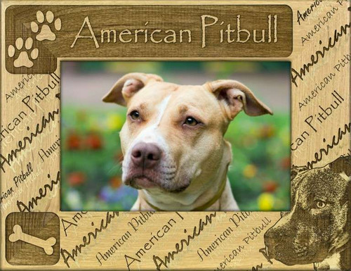 Frame - American Pitbull