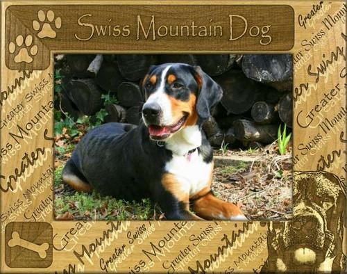 Frame - Swiss Mountain Dog