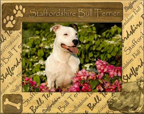 Frame - Stafford Bull Terrier