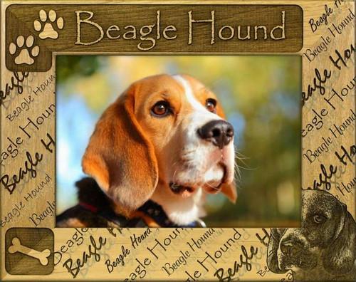 Frame - Beagle Hound