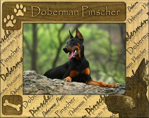 Frame - Doberman Pinscher