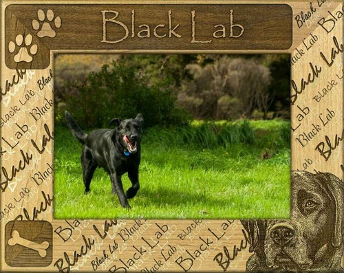 Frame - Black Lab - DBA0240