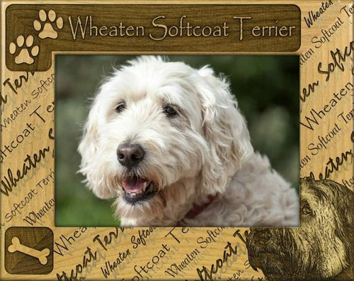 Frame - Wheaten Softcoat Terrier