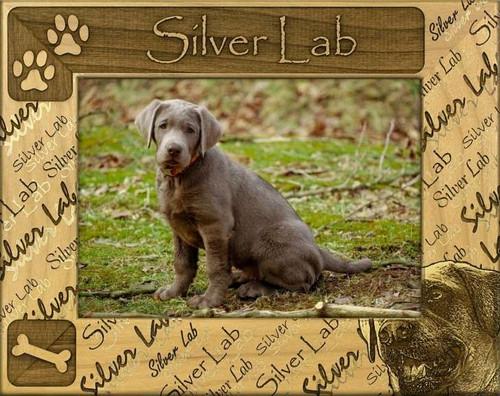 Frame - Silver Lab