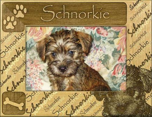 Frame - Schnorkie