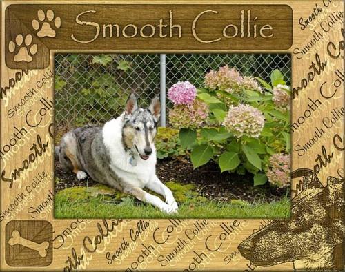 Frame - Smooth Collie