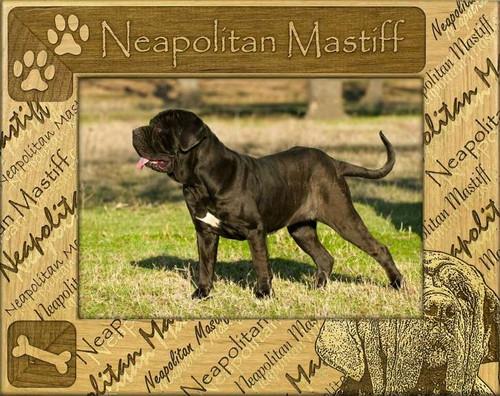 Frame - Neapolitan Mastiff