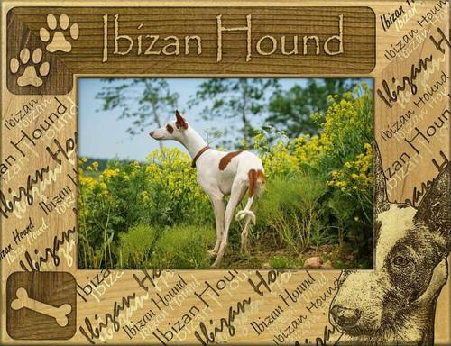 Frame - Ibizan Hound