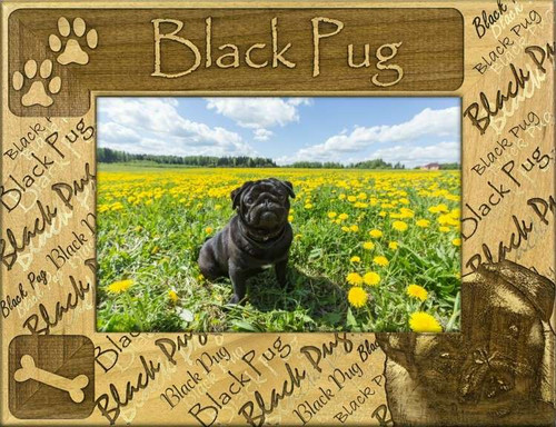 Frame - Black Pug