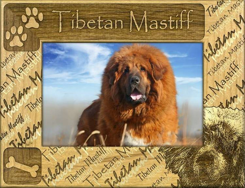 Frame - Tibetan Mastiff