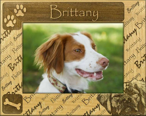 Frame - Brittany Spaniel - DBA0258