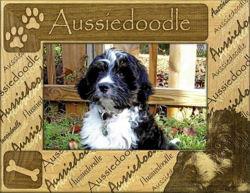 Frame - Aussiedoodle