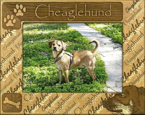 Frame - Cheaglehund