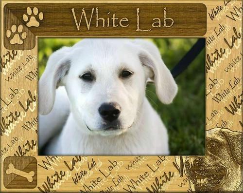 Frame - White Lab