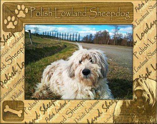 Frame - Polish Lowland Sheepdog