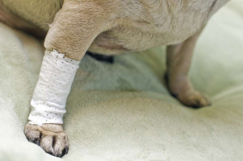 Pawflex Basic Bandages