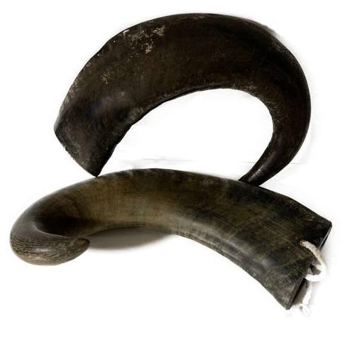 Water Buffalo Horn - Large