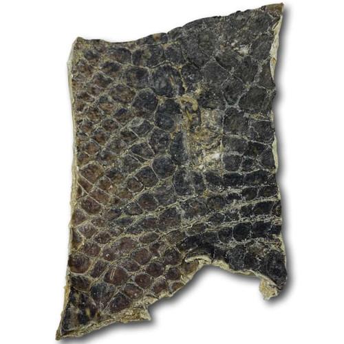 Gator Chips