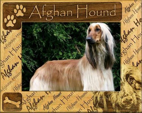Frame - Afgan Hound