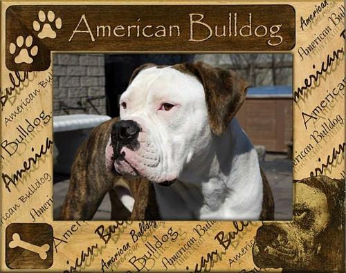 Frame - American Bulldog