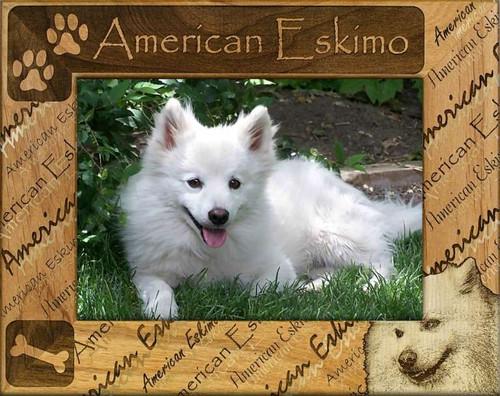 Frame - American Eskimo