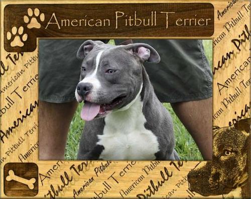Frame - American Pitbull Terrier
