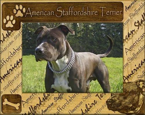 Frame - American StaffordshireTerrier